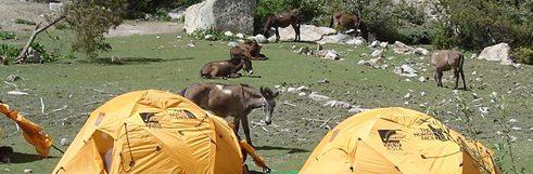 Nepal-Tibet-TKTQ28