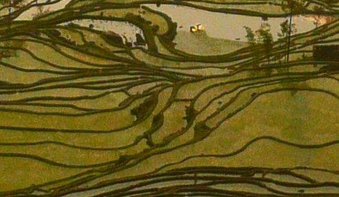 Yuanyang rijstterrassen
